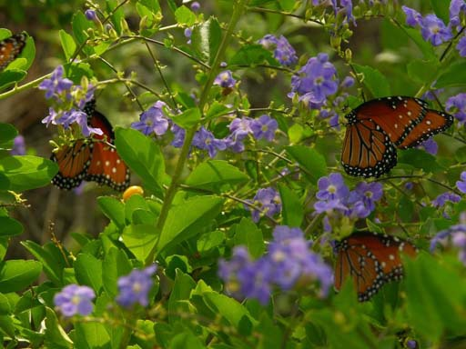Itu0027s Relatively Easy To Have A Butterfly Garden, And The Beauty Of It  Always Causes Visitors To Exclaim In Joy. If You Want To Grow A Butterfly  Garden, ...